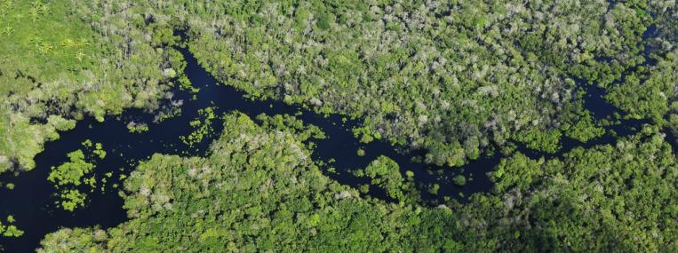 Aerial photo of the Amazon Rainforest by Neil Palmer (CIAT) via Flickr