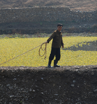 In North Hwanghae Province farmers work on water ponds which are also used to produce water lillies. (Devrig Velly EU/ECHO)